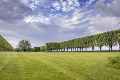French palised trees on lawn in Bellevue, France Stock Images