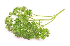 French parsley chervil isolated on white background. French parsley chervil isolated on a white background Stock Photography