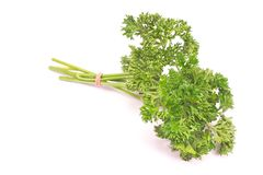 French parsley chervil isolated on white background. French parsley chervil isolated on a white background Royalty Free Stock Photo