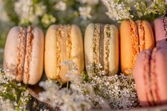 French pastries. Dessert sweets macarons and meadow white flowers in the summer evening in the orchard. stock images