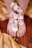 French pedicure Stock Image