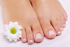 French pedicure on a female feet stock photos
