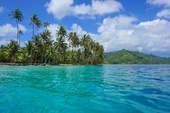 French Polynesia coconut palm trees motu Huahine Royalty Free Stock Image