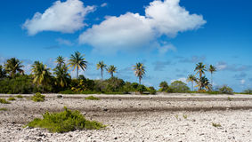 French Polynesia. Coral fields and palm trees. Stock Photography