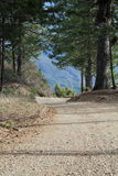 French Ridge on Elk moutain in Lake County. A look down a dusty road in the pine forest Stock Images