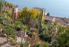 The exotic garden of the village of Eze, France Stock Image