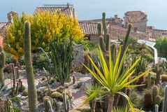 The exotic garden of the village of Eze, France Stock Images