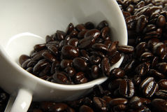 French Roast Coffee Stock Photography