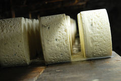 French roquefort cheese. Roquefort cheese in refining in a typical cellard Royalty Free Stock Images