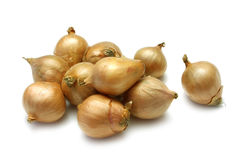 French Shallot Royalty Free Stock Photos