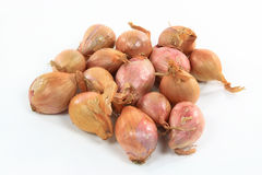 French Shallots. Royalty Free Stock Photos