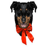 French shepherd dog head sketch Royalty Free Stock Photos