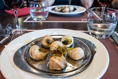 French snail. Meal in plate ready for serving Stock Image