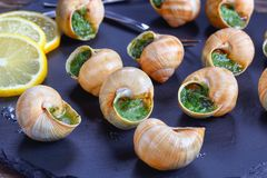 French Snails with herbs, butter, garlic Stock Photography