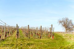 French springtime landscape with valleys of vineyard. Alsace. royalty free stock images