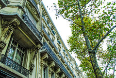 French street in Paris. With amazing plats during daytime Stock Photography