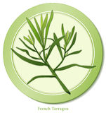 French Tarragon Herb. French Tarragon, aromatic perennial herb with lance-shaped leaves is a classic ingredient of Fines Herbes used in Mediterranean cuisine for Royalty Free Stock Photography