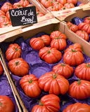 French tomatoes Stock Image