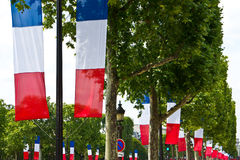 French Tricolor Flags in Paris. French tricolor flags run along the tree-lined Champs-Elysees in celebratio of the Fete Nationale in Paris Stock Image