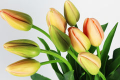 French Tulips flowers on the white background Stock Images