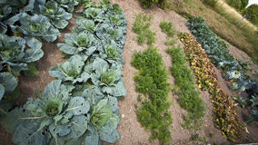 French vegetable garden Stock Photo
