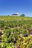 French vineyads Royalty Free Stock Photo