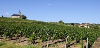 French vineyads Royalty Free Stock Image