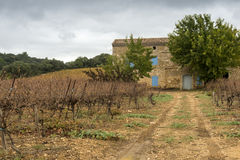French vineyard Stock Image