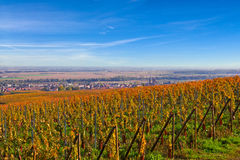 French vineyard Royalty Free Stock Image