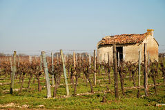 French vineyard. View of a French vineyard early in the season royalty free stock image