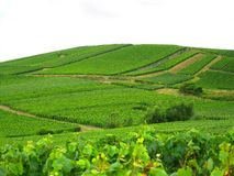 French Vineyard Royalty Free Stock Photo