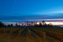French Vineyard Royalty Free Stock Image