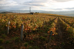 French vineyard in autumn Stock Photo