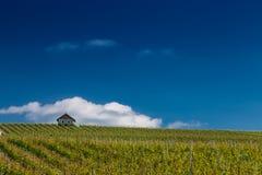 French Vineyard Stock Photos