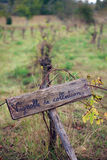 French vineyard. Old and rustic French sign in a vineyard with engraving saying collectable vineyard Royalty Free Stock Images