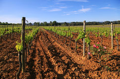 French vineyard Stock Images