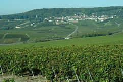 French vineyards Stock Images