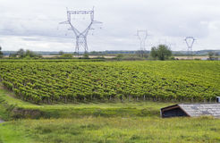 French vineyards landscape Stock Image
