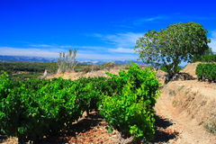 French vineyards in provence Stock Image