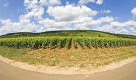 The french way. Vineyard from Burgundy. Stock Photo