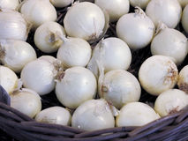 French white onions Stock Photography