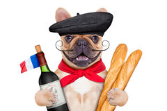 French wine dog Royalty Free Stock Photography