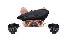 French wine dog Stock Photo