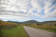 French wineyard in alsace Royalty Free Stock Photo