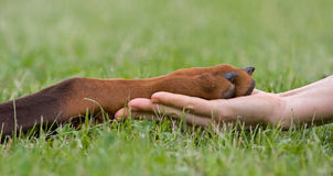 Frendship. Friendship between human and animal - puppy give woman paw - handshake Stock Photo