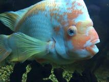 Frenesí de los pescados Imagen de archivo libre de regalías