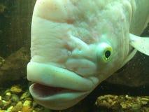 Frenesí de los pescados Fotografía de archivo