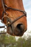 Frenillo del caballo imagenes de archivo