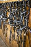 Frenillos del caballo que cuelgan en establo Imágenes de archivo libres de regalías