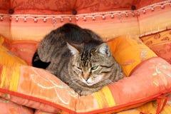 frenky katt arkivbild